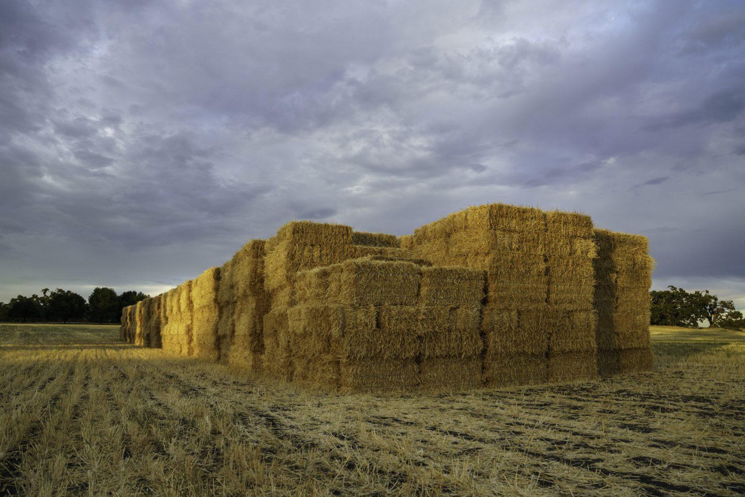 Agri Waste